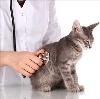 Ветеринарные клиники в Западной Двине